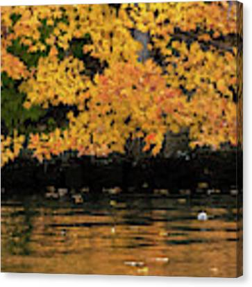 Yellow On Water Canvas Print by Dan Friend