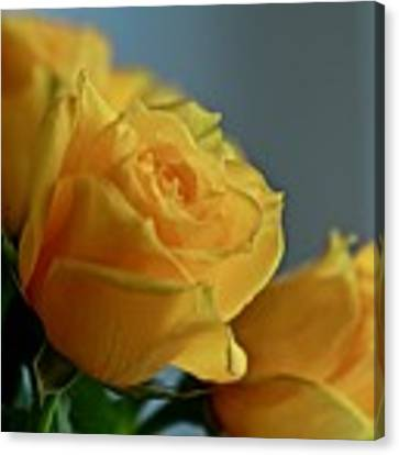 Yellow Roses Canvas Print by Ann E Robson