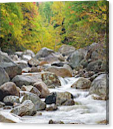 Zealand River - White Mountains, New Hampshire Canvas Print by Erin Paul Donovan