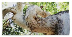 Sycamore Tree's Twisted Trunk Bath Towel by Tom Janca