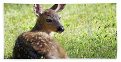 A Fawn On The Lawn Bath Towel