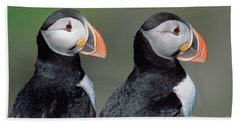 Atlantic Puffins In Breeding Colors Hand Towel