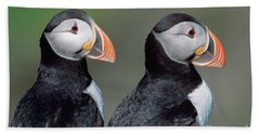 Atlantic Puffins In Breeding Colors Hand Towel by Yva Momatiuk and John Eastcott