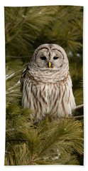 Barred Owl In A Pine Tree. Hand Towel