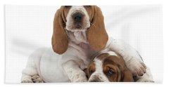 Basset Hound Puppies Bath Towel