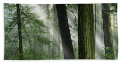 Beauty Of California Redwoods 4 Hand Towel