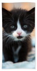 Black And White Kitten Hand Towel