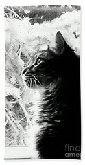 Hand Towel featuring the photograph Bo by Jacqueline McReynolds