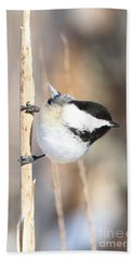 Bath Towel featuring the photograph Black Capped Cutie by Heather King