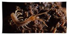 Cave Centipede Bath Towel