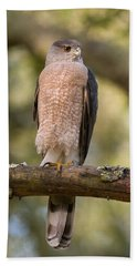 Cooper's Hawk Hand Towel by Doug Herr