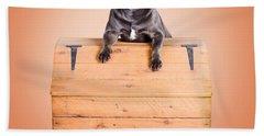 Cute Purebred Blue Staffy Dog Posing On Wooden Box Hand Towel
