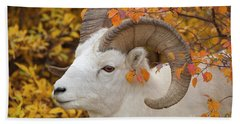 Dalls Sheep Ram In Denali Hand Towel