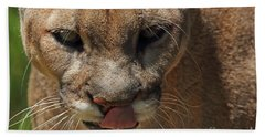 Bath Towel featuring the photograph Florida Panther by Meg Rousher