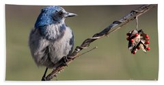 Florida Scrub Jay Hand Towel by Meg Rousher
