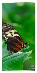 D5l15 Butterfly At Franklin Park Conservatory Hand Towel