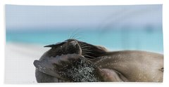 Galapagos Sea Lion Pup Covering Face Hand Towel
