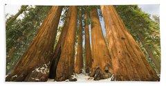 Giant Sequoias Sequoia N P Hand Towel