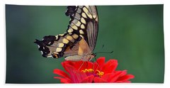 Giant Swallowtail Hand Towel