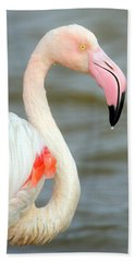 Greater Flamingo Phoenicopterus Roseus Hand Towel