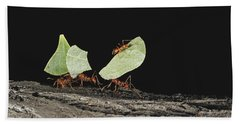 Leaf-cutting Ants Hand Towel