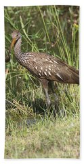Bath Towel featuring the photograph Limpkin In The Glades by Christiane Schulze Art And Photography