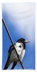 Magpie Up High Hand Towel by Jorgo Photography - Wall Art Gallery