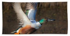 Male Northern Shoveler Hand Towel