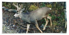 Mule Deer Bath Towel by D Hackett