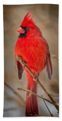 Northern Cardinal Hand Towel by Bill Wakeley