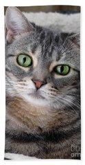 Portrait Of An Ameriican Shorthair Cat Hand Towel