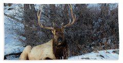 Rocky Mountain Elk Hand Towel