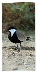 Spur-winged Plover And Chick Hand Towel