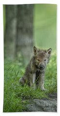 Timber Wolf Pup Hand Towel