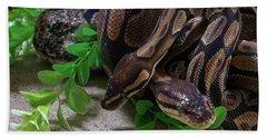 Two Burmese Pythons Python Bivittatus Hand Towel