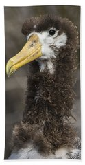 Waved Albatross Molting Juvenile Hand Towel