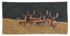 Hand Towel featuring the photograph 130201p298 by Arterra Picture Library