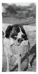 1930s Dog Holding Cat In Straw Basket Hand Towel