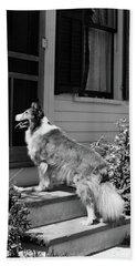 1930s Rough Scotch Collie Dog Standing Hand Towel
