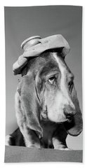 1960s Basset Hound With Ice Bag Pack Bath Towel