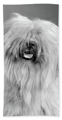 1960s Portrait Of Old English Sheepdog Hand Towel