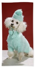 1970s White Poodle Wearing Blue Sweater Hand Towel