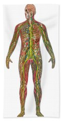 5 Body Systems In Male Anatomy Bath Towel