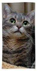 American Shorthair Cat Portrait Hand Towel