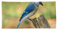 Blue Jay Hand Towel by Millard H. Sharp