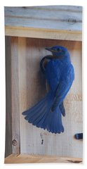Bluebird Of Happiness Hand Towel