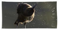 Boat Tailed Grackle Hand Towel by Meg Rousher
