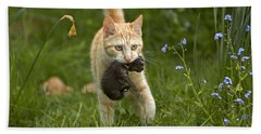 Cat Carrying Kitten Hand Towel