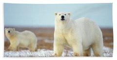 Female Polar Bear With Spring Cub Hand Towel