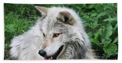 Hand Towel featuring the photograph Gray Wolf by Alyce Taylor